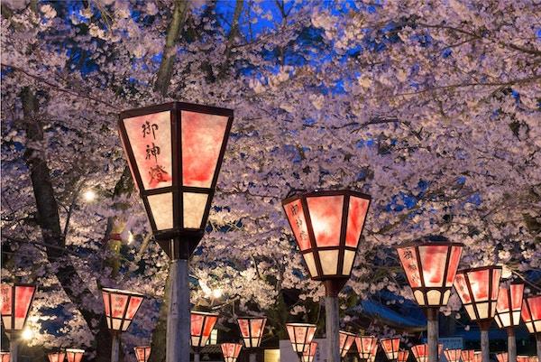 "Lykta i Sakura-festivalen på Mishima-helligdommen, Shizuoka, Japan. Lykten lyder ""Guds lys"""