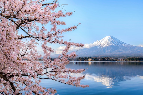 Monter fuji ved kawaguchiko-sjøen med kirsebærblomst i Yamanashi nær Tokyo, Japan.