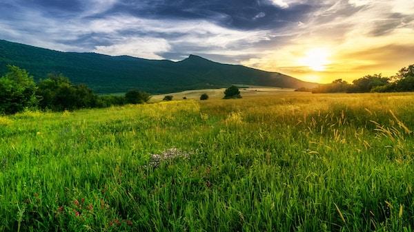 solen setter seg bak vårt lokale fjell som heter - Smedovets og hvetefeltene så ut som gull.