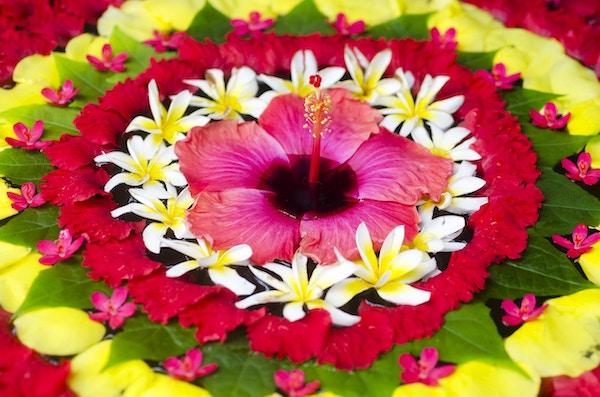 Dekorasjon av tropiske blomster - flytende på vannet; makro på nært hold; Bali, Indonesia .