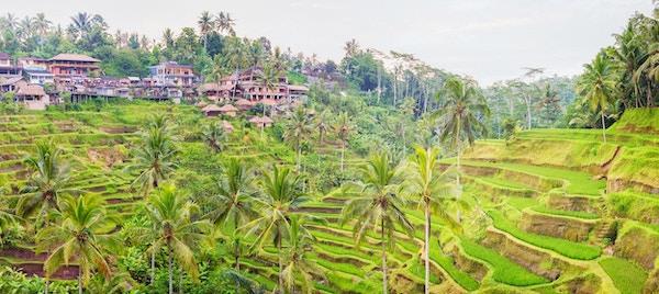 Panorama Bali terrassert risåker med landsbyen Tegalalang på en varm vårdag.