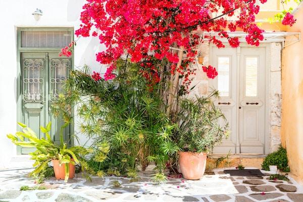 Gamle tredører, tre- og Bougainvillea-blomster, Paros, Hellas. Paros er en gresk øy i det sentrale Egeerhavet, den ligger vest for Naxos.