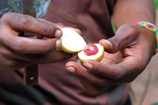 En åpnet muskatnøtt i Zanzibar