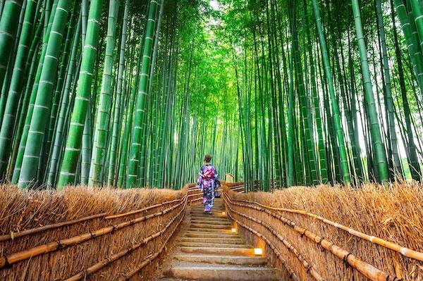 Bambusskog. Asiatisk kvinne som bærer japansk tradisjonell kimono ved Bamboo Forest i Kyoto, Japan.