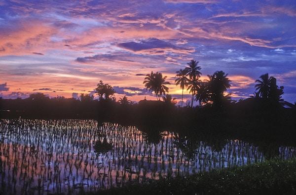 Solnedgang fra et risfelt i Ubud, Bali, Indonesia.