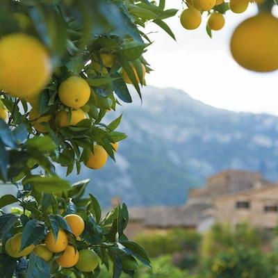 Typisk utsikt i den berømte landsbyen Fornalutx nær Soller. På Mallorca, Spania.