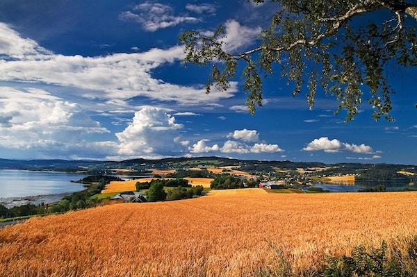 Kornåker og landskap og himmel med skyer