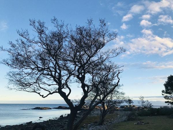 Et stort tre brer sine greiner utover sjøen