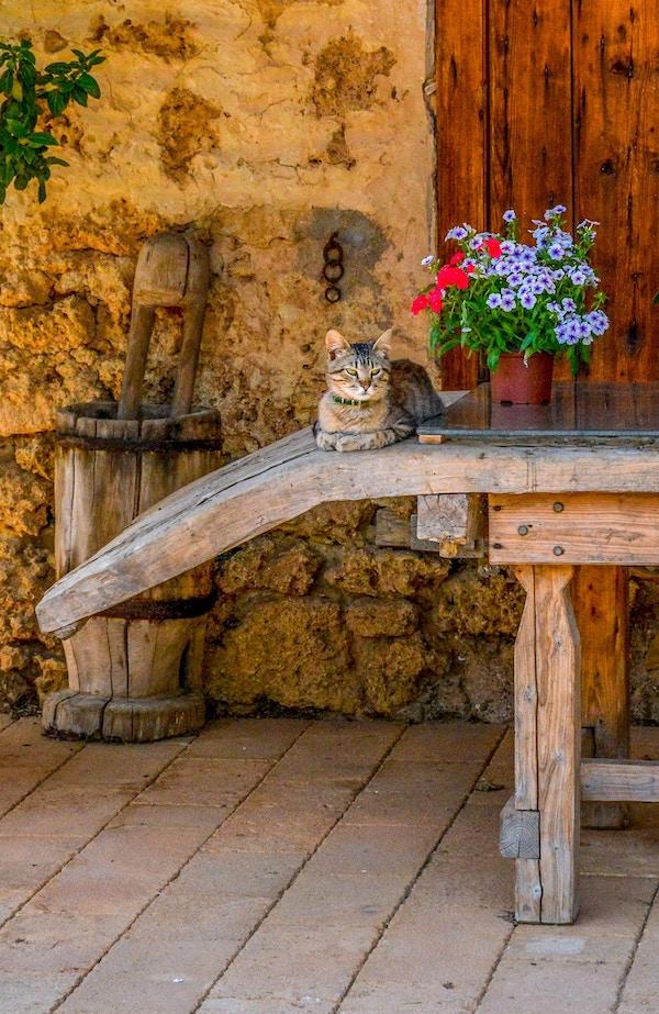 Grå katt og krukke med blomster på et trebord i en gård.