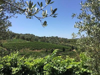 Bardha winery albania