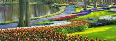 Fargerike tulipaner langs et tjern i en park. Beliggenheten er Keukenhof Gardens, Nederland