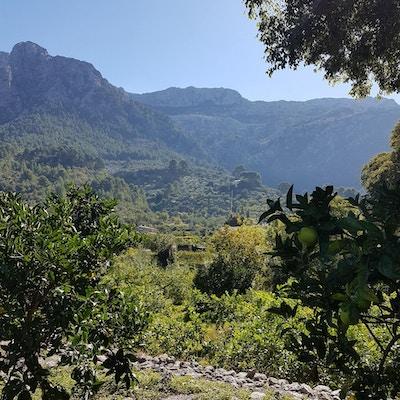 Eco Vinyassa, Mallorca