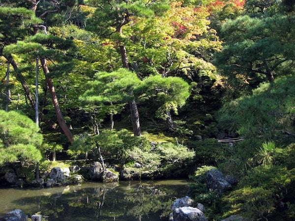 Ginkaku-ji (Temple of the Silver Pavilion) er et kjent Zen-buddhisttempel i Kyoto, Japan. Tempelet er også kjent som Jisho-ji (Temple of Shining Mercy), og dateres tilbake til 1460. Bortsett fra hovedpaviljongen (Kannon Hall), er tempelet også kjent for sine mosehager, vakre landskap og sandhage. Her begynner høstløvet bare å vises.