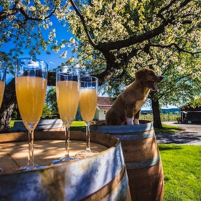 Fire glass med fruktdrikke står på en tretønne og ved siden av sitter en liten hund
