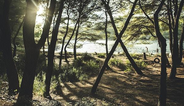 Middelhavets svaberg og landskap - Odysseus hule på øya Mljet, en turistattraksjon i Kroatia. Rolig utsikt over havet gjennom trærne. Middelhavslandskap - gangsti og furu.