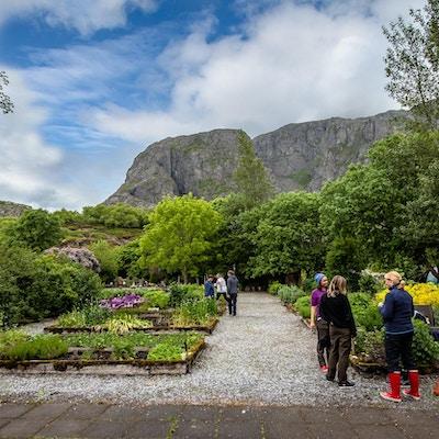 Menneker som står foran grønne busker og urter med fjell i bakgrunnen