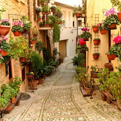 Blomster i Castelluccio of Norcia