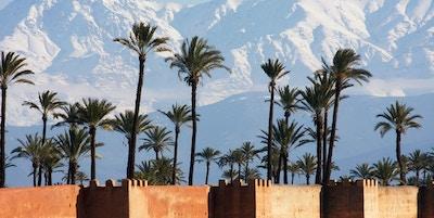 Høye palmer med de store Atlasfjellene i bakgrunnen