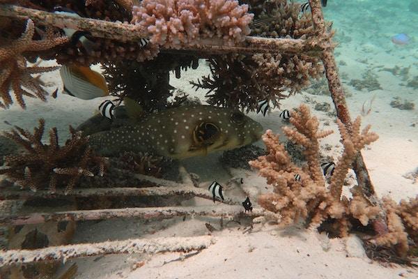 Koraller plantet og en fisk svømmer rett over sandbunn