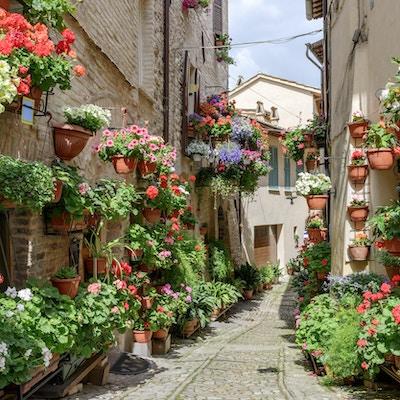 Sidegate med blomster i byen Spello i Umbria, Italia