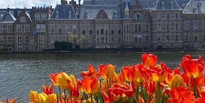 Tulipaner i Den Haag