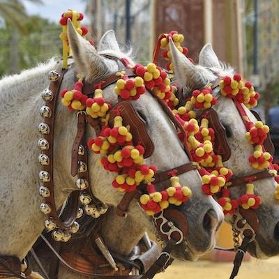 Hester tildekket på en messe, Jerez de la Frontera
