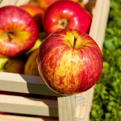 Røde og gule epler i en kasse.