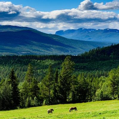 Utsikt over Espedalen med grønne skogsområder og fjell i bakgrunnen bak to hester som går på beite