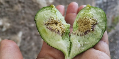 en hånd som holder en type frukt som er ødelagt i en hjerteform
