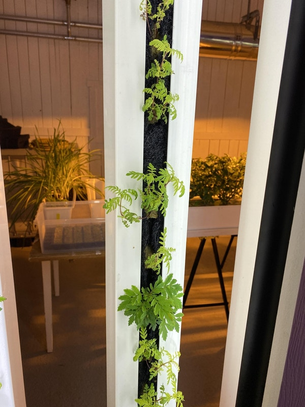 Planter dyrkes inne uten jord