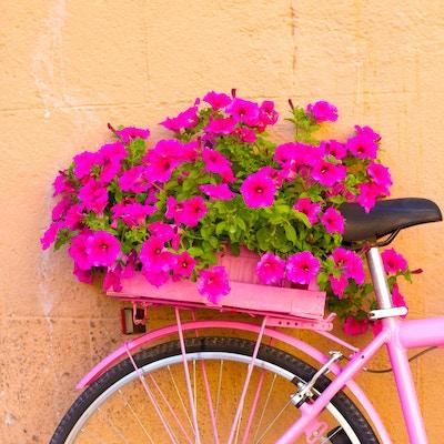Gettyimages 824576734 Italia Montefalco Blomste Sykkel Sommer