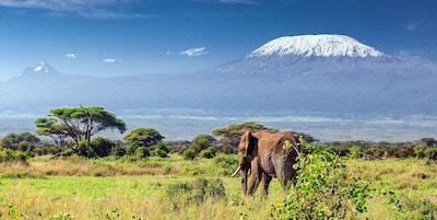 Gettyimages 513568959 Kenya Amboseli Elefant