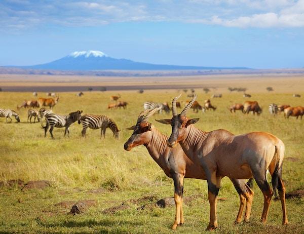 Gettyimages 606224696 Kenya Amboseli Antilope 72