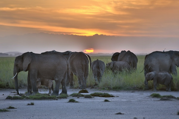 Gettyimages 512630300 Kenya Amboseli Elefant