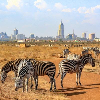 Gettyimages 926974946 Kenya Nairobi Nasjonalpark Safari