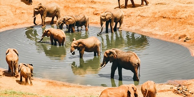 Getty Images 1151155295 Afrika Kenya Safari Tsavo East elefant