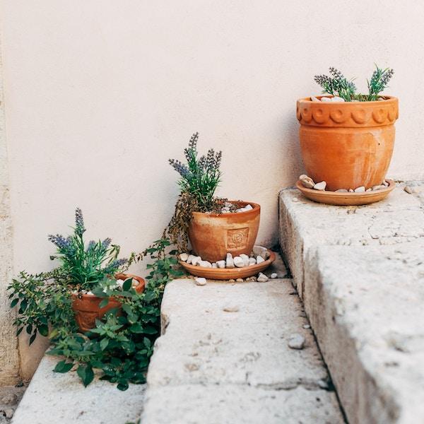 Gettyimages 971053698 Kroatia Dubrovnik Blomster