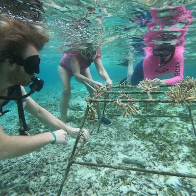 En gruppe mennesker under vann planter koraller for fornying