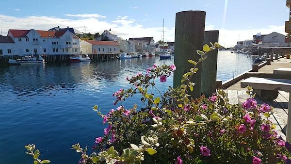 Norge Lofoten Henningsvaer Havn