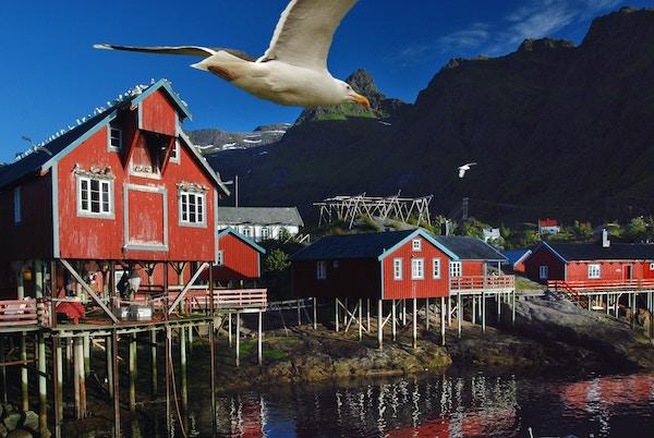 Istock 92549505 Norge Lofoten Fiskevaer