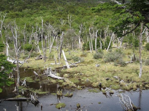 Tierra del Fuego2