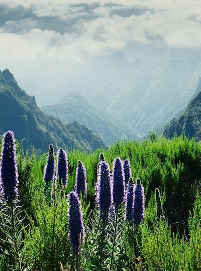 Trekking på levada-ruten som går over de vakre engene og toppene i de høyeste Madeira-fjellene tapt i skyer