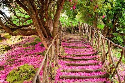 Trapp i tre utendørs overdekt med rosa blomsterblader fra et tre.